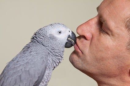 why do parrots rub their beaks on you?