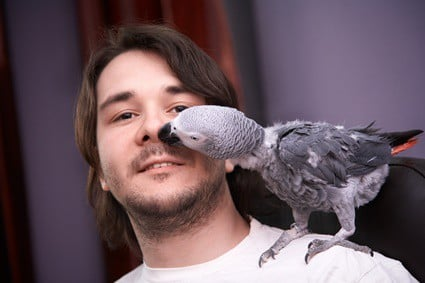 why does my parrot tap its beak on me?