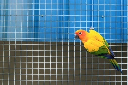 why is my parrot scared of me?