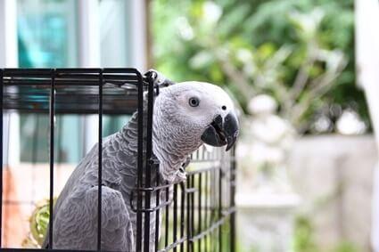 worms in parrots symptoms
