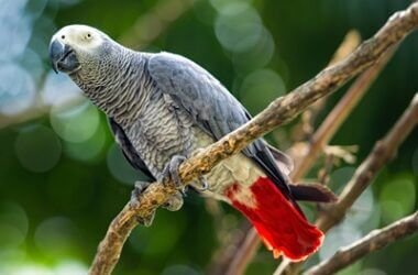 are African grey parrots hard to take care of?