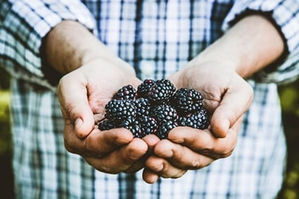 are blackberries good for parrots?