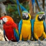 are parrots classed as birds or animals?