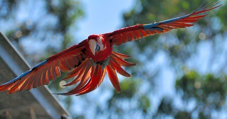 are parrots considered animals or birds?