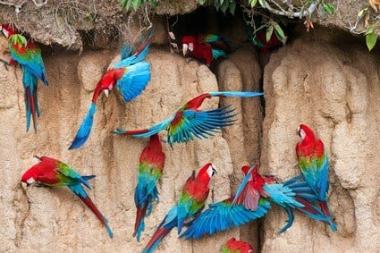 best clay for parrots