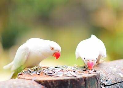 best seeds for parrots