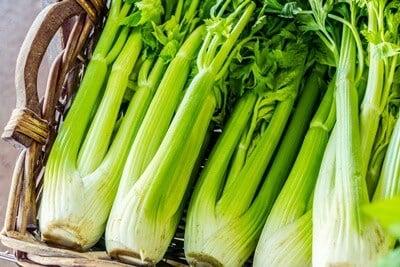 can parrots eat celery?