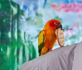 can parrots eat digestive biscuits?