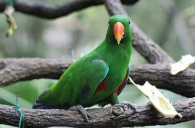can parrots eat sugarcane?