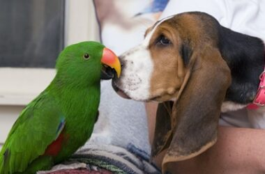 do dogs and parrots get along?