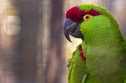 do parrot bites hurt?