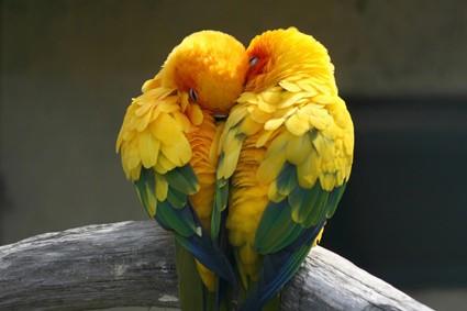 friendly parrot species