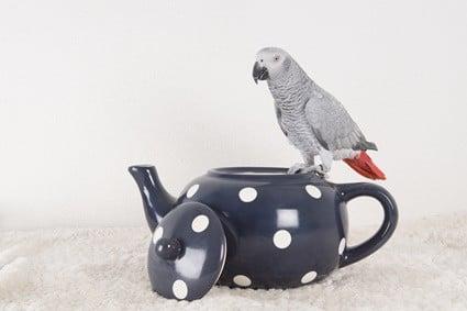 is tea ok for parrots?