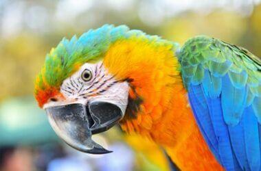 parrot mites treatment