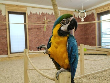 parrot standing on one leg meaning