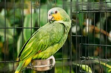 parrot won't leave cage