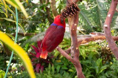 preparing pine cones for parrots