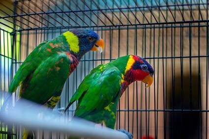 what time should I cover my parrot's cage?