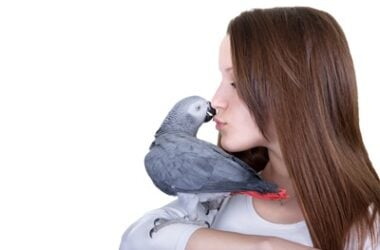 Can Parrots Be Attracted To Humans?
