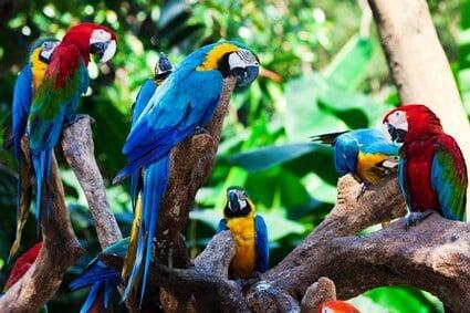 are parrots prey or predator?