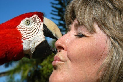 are parrots sexually attracted to their owners?
