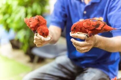 can parrots drink apple cider vinegar?