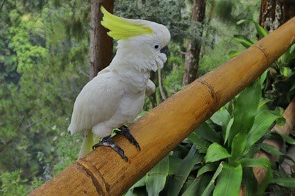 can parrots eat bamboo?