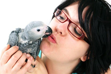 can parrots hold a conversation?