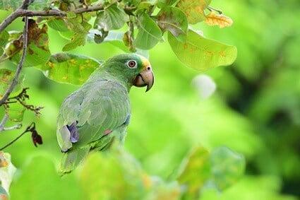 cashew nuts for parrots