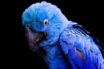 do parrots feel lonely?