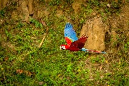 do parrots have strong bones?