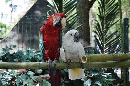 do parrots like bamboo?