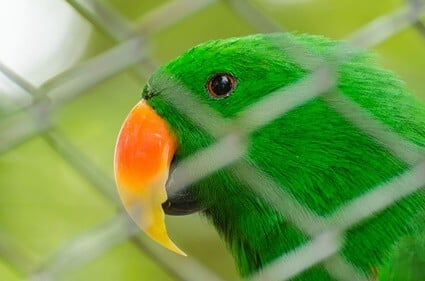 do parrots like living in cages?