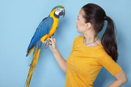 do parrots understand what they're saying?