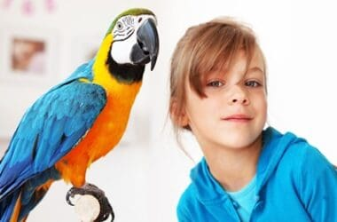 do parrots understand what we say?