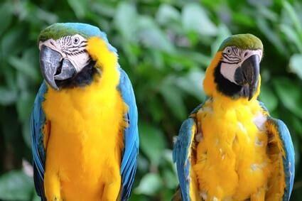 how many bones do parrots have?