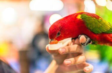 is apple cider vinegar good for parrots?