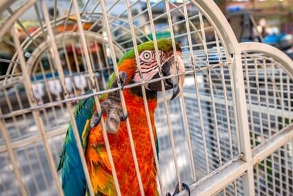 is it cruel to keep parrots in cages?