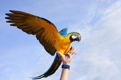 macaw size comparison
