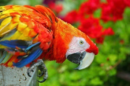 most colorful parrots in the world