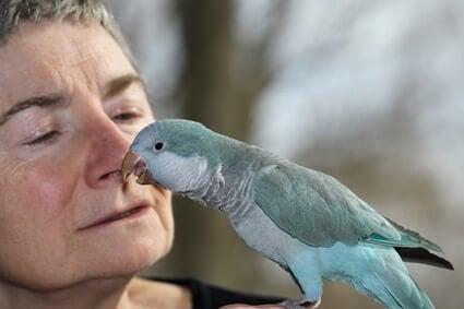 my bird thinks I'm its mate