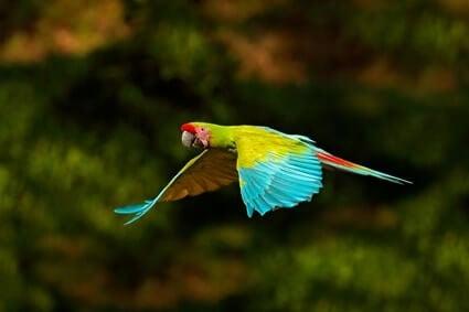 parrot hearing range