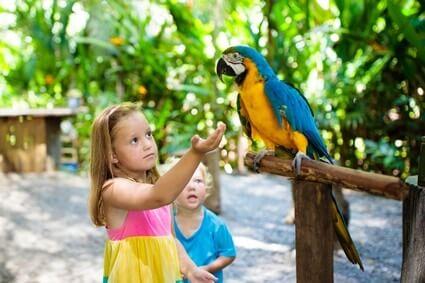 quietest macaw