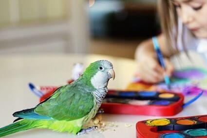sour crop symptoms in parrots