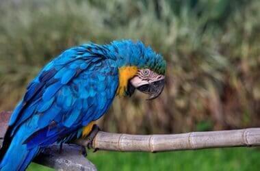 treatment for sour crop in parrots
