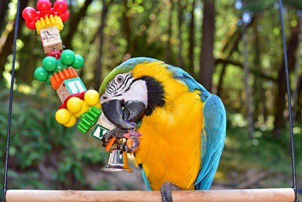 what do parrots like to do for fun?