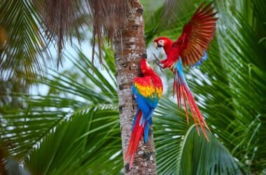 what do parrots prey on?