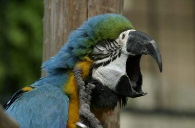 what makes parrots yawn?