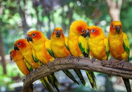 why are parrots brightly colored?