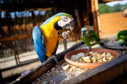 best source of protein for parrots